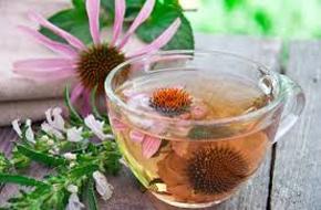 Megfázásra – bíbor kasvirág